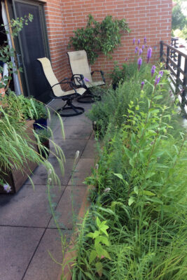 Native plant container garden