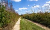 Trail through Curtis Prairie