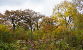 Wingra Oak Savanna