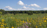 View of Curtis Prairie from the Wisconsin Native Plant Garden