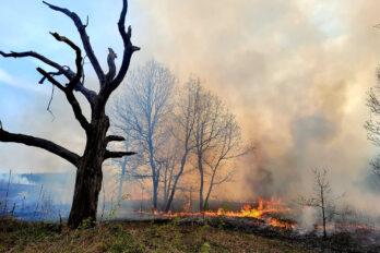 Prescribed fire at Curtis Prairie, near the Jackson Oak