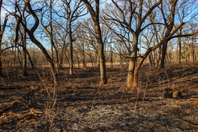 After a prescribed fire at Grady Tract, kettlehole