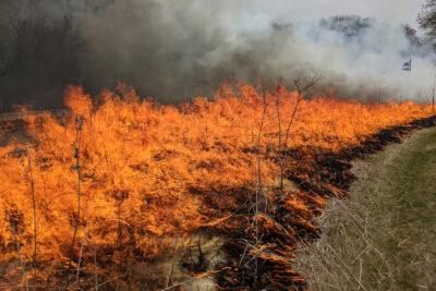 Prescribed fire at west Curtis Prairie