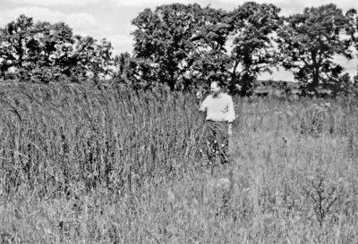 John Curtis examining prairie grass growth.