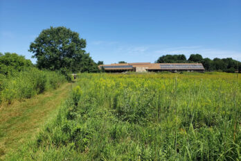 A trail through Curtis Prairie in summer leads to the Visitor Center
