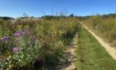 Trail in Curtis Prairie
