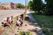 Four people planting a terrace rain garden at Neighborhood House