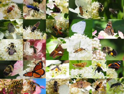 Collage of some of the insects photographed in 2019