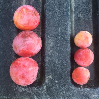 Select plum vs. standard type