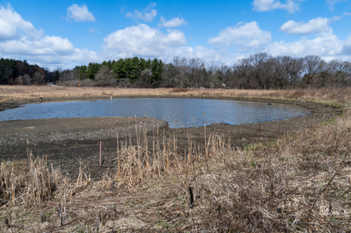 Curtis Pond, partially drawn down