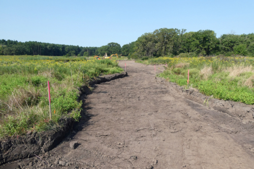 Portion of the reed canary grass scrape